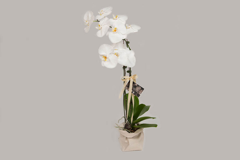 Mark  Flower